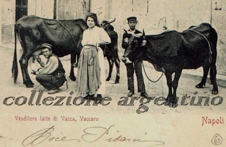 Bovini di razza Agerolese in una cartolina d'epoca