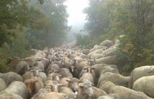 Foto Arpo® - Associazione Regionale Produttori Ovicaprini d'Abruzzo