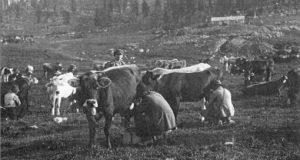 Una mungitura sull'Altopiano di Asiago negli Anni '30