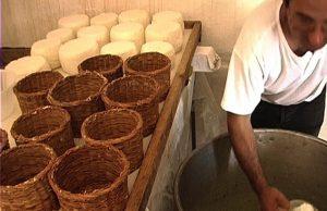 Cacioricotta di capra garganica: la messa nelle fuscelle della pasta casearia