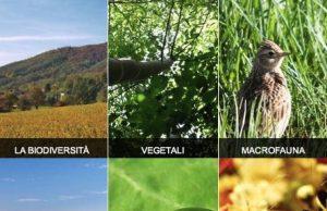 Le molteplici espressioni della biodiversità in un composit dal sito web del progetto BioDiversamente