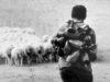 Un'immagine storica del pastoralismo sardo, divulgata dal Comune di Ollollai in occasione del conferimento del titolo di Patrimonio Intangibile dell'Umanità dell'Unesco