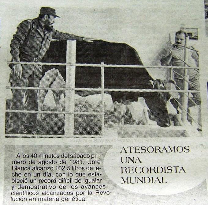 Negli Anni '80 Fidel Castro amava farsi ritrarre con la vacca cubana dei record, la Ubre Blanca, che si dice abbia prodotto oltre cento litri al giorno