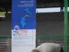 Un momento della gara di tosatura a Beja, la scorsa domenica, 19 aprile
