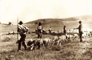 Pastori in transumanza in una foto della prima metà del XX secolo