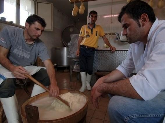 La filatura della pasta casearia per la realizzazione del tipico Caciocavallo Podolico - foro Masserie Colantuono®
