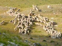 foto Parco Nazionale del Gran Sasso e Monti della Laga©