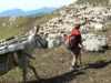 foto Pasturs - Cooperativa Eliante Onlus®