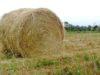 Il progetto del Latte Regis prevede che l'alimentazione delle bovine sia basata sull'uso del fieno
