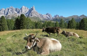 Pascoli trentini - foto Provincia Autonoma di Trento®