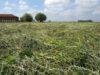 Il buon fieno nasce nei buoni pascoli polifiti; qui l''erba appena sfalciata a Cascina Roseleto, a Villastellone (Torino). L'azienda ha riconvertito da intensivo ad estensivo nel 201 - foto Cascina Roseleto©
