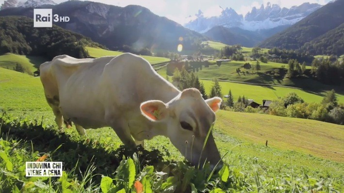Le vacche dell'erba esistono, in montagna e in pianura. E fanno ancora un ottimo latte. Peccato che la trasmissione non ne abbia voluto parlare