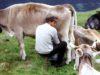 foto Ersaf (Ente Regionale per i Servizi all'Agricoltura e alle Foreste)©