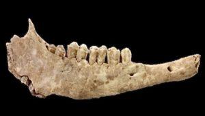 Mandibola ovino - Grotta di Chaves