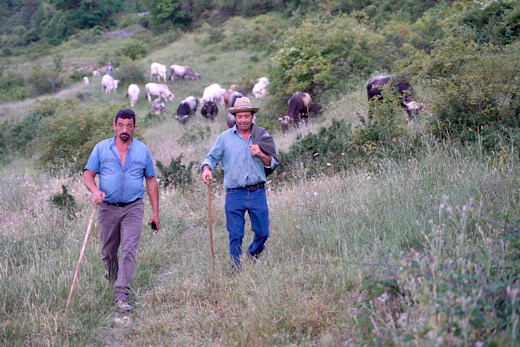 Pastori lucani in transumanza