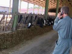 Stalla di bovine da latte