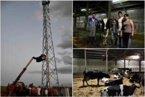 Vacche in stalla e antenna 4G